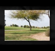 Chandler Real Estate for Sale at Springfield
